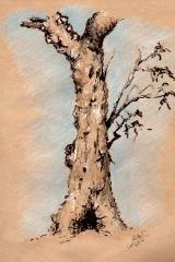 Tree Stduy 2